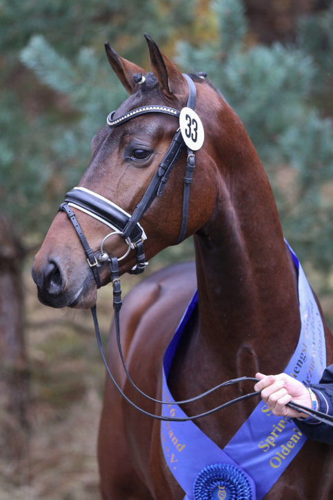 Newcomer: OS-Champion Stallion goes to Bonhomme