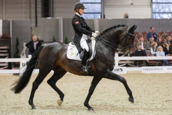 Feu D'Or gewinnt Prix St. Georges – insgesamt acht Top 3-Platzierungen für Bonhomme