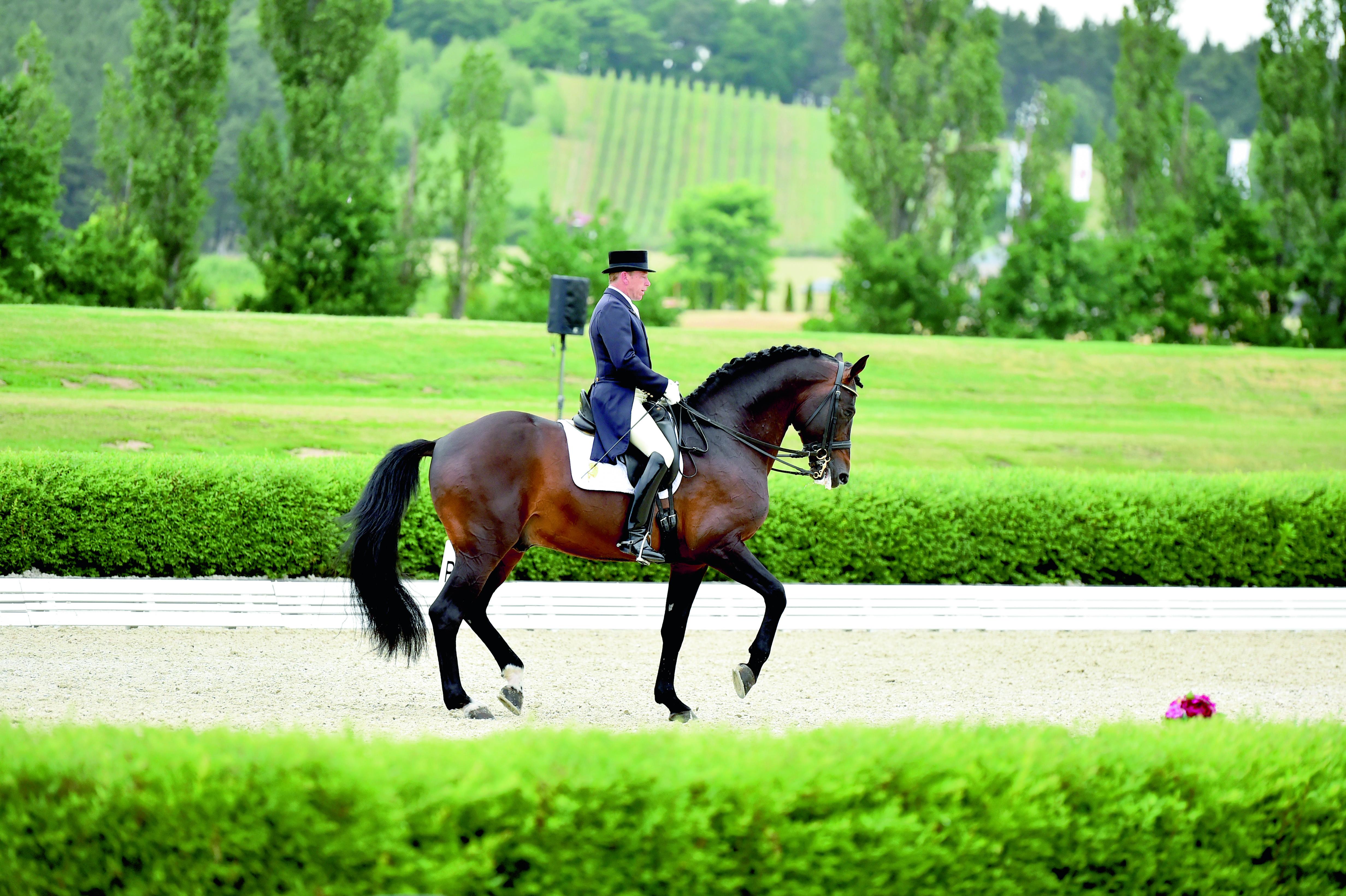 Sir Liberty v. Sir Landadel - Norman - Rheinprinz, hocherfolgreich bis hin zum Grand Prix unter Falk Rosenbauer