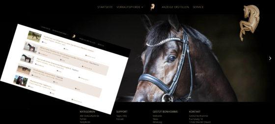Neu: Verkaufspferde-Plattform