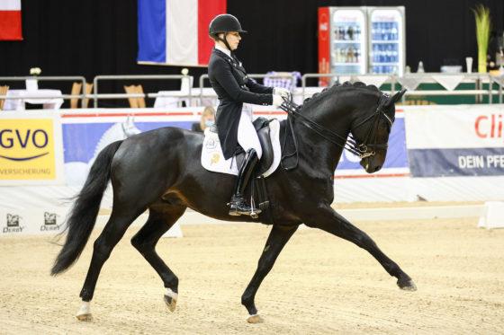 CDI 4* Oldenburg: Grey Flanell qualifiziert sich zum Louisdor Preis Finale